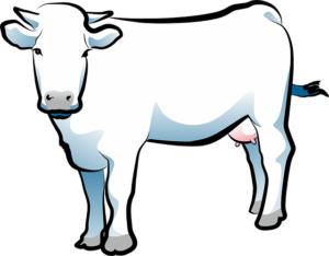 cow-1472655_640