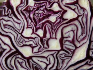 red-cabbage-293349_640